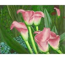 Pond Lilly's Photographic Print