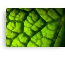 Eco Subdivision Canvas Print