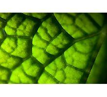 Eco Subdivision Photographic Print