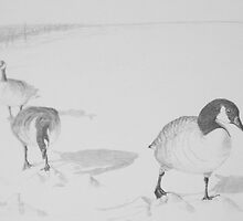 Canada Geese in December by RedPine