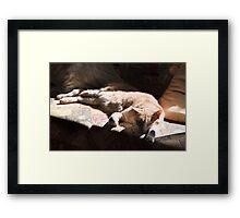 Raymond Sun Seeker Framed Print