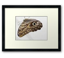 Hanging Owl Butterfly Framed Print