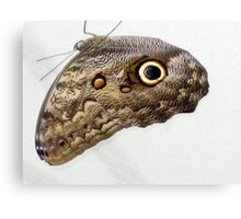 Hanging Owl Butterfly Canvas Print