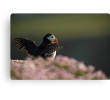 The Puffin King Canvas Print