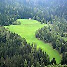 Mountain meadow in Wipptal - Austria by Arie Koene