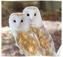 two owls friends Poster
