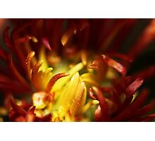 Yellow and Red Photographic Print