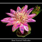 "Pink Waterlily - ""Enameled"" Special Effect by Rose Santuci-Sofranko"