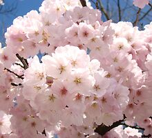 Bright Pastel Pink Spring Tree Blossom Flowers Baslee by BasleeArtPrints