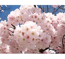 Bright Pastel Pink Spring Tree Blossom Flowers Baslee Photographic Print