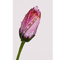 Bubbling daisy Photographic Print