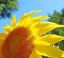 Contemporary art Yellow Sunflower print Photography by BasleeArtPrints
