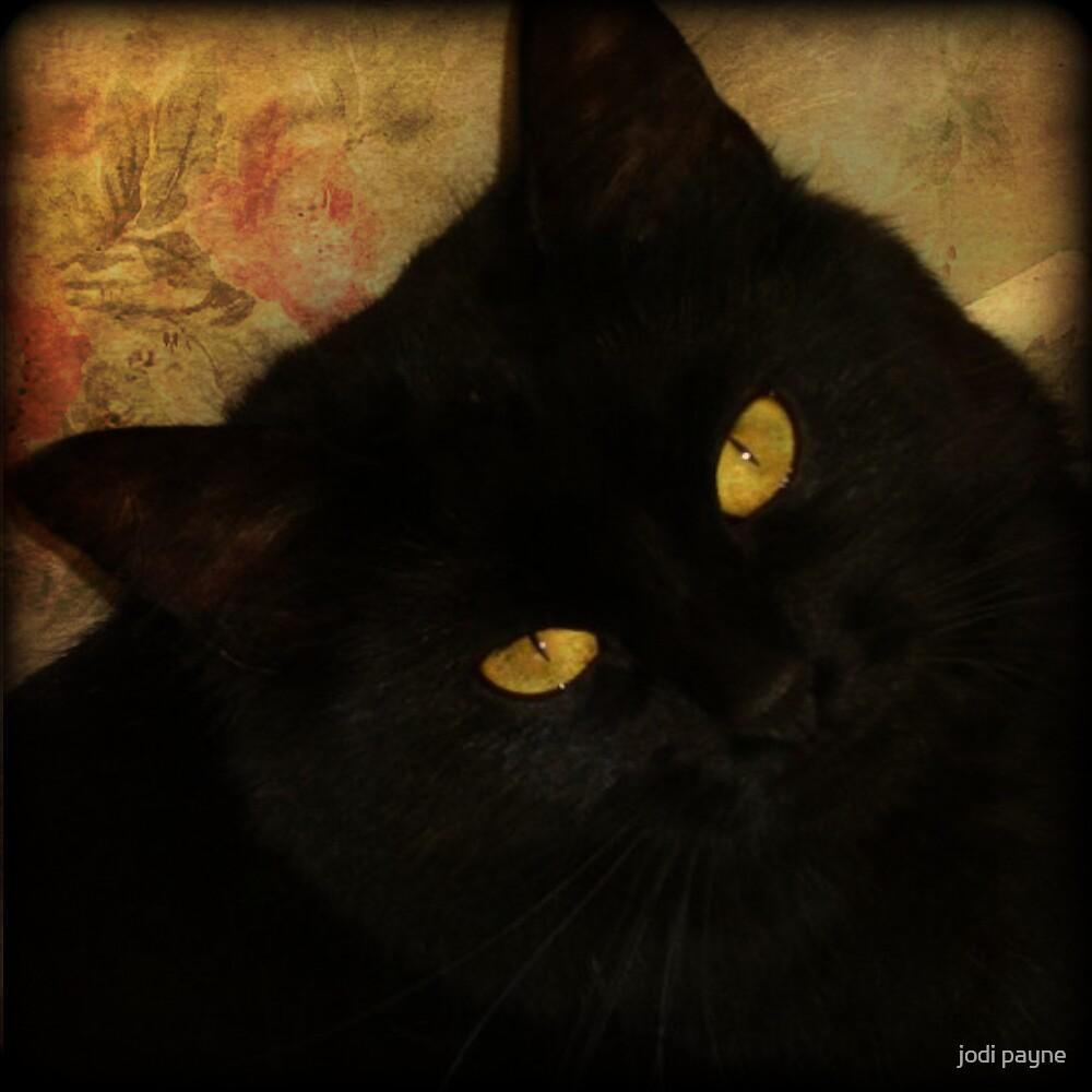 Sweet Suki by jodi payne