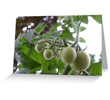 Pending Tomatoes Greeting Card