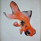 Goldfish by Clare Lawrence