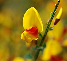 Yellow and Red flowers by Leon Heyns