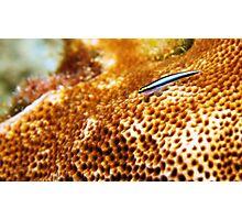 Coral Fish  Photographic Print