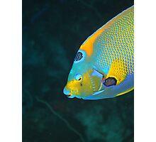 Queen Angel Fish Photographic Print