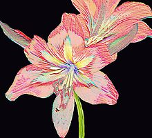 Amaryllis   126 Views by Rosalie Scanlon