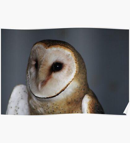 """Barn Owl - """"Casper"""" Poster"""