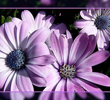 Purple and blue by Shannon  Torrey