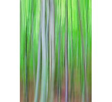 Dancing trees I Photographic Print