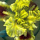 Looking into the yellow Iris by Sarah Trett