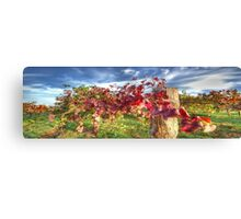 Vines of Shiraz Panorama Canvas Print