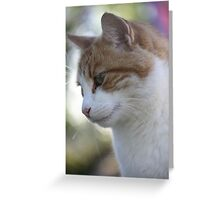 The old ginger cat Greeting Card