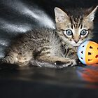 a playful kitten by Tammy Kuiler
