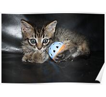 little kitten playing Poster