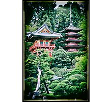 Tea Garden and Trees Photographic Print