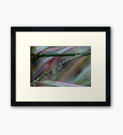 Garden Delights Framed Print
