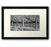 Fence posts Framed Print