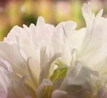 Bridal Peony by Margi