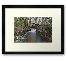 Black Jungle Framed Print
