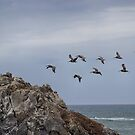 Pelicans by Stephen  Van Tuyl