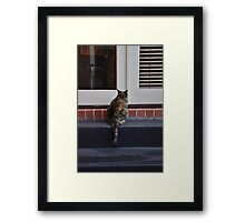 Can somebody let me in ? Framed Print