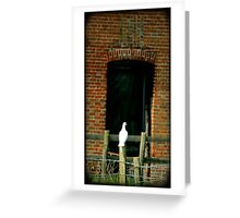 White dove Greeting Card