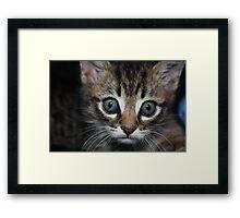 playful kitten in an arm chair Framed Print