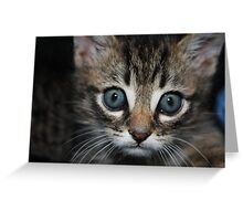 playful kitten in an arm chair Greeting Card