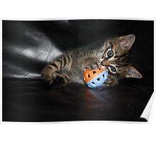 kitten playing ball Poster