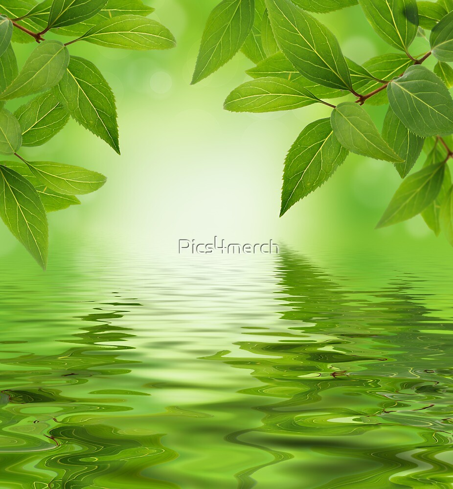 Green leaves by Pics4merch