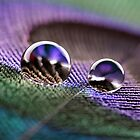 Water droplets on peacock feather by Pics4merch