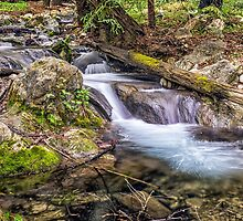 HARE CREEK FLOW by joseph s  giacalone
