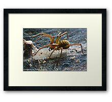 Large Spider Framed Print