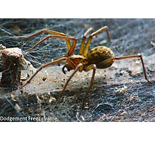 Large Spider Photographic Print