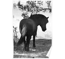 Cheaky pony Poster