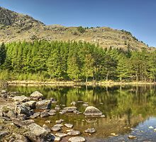 Blea Tarn-Wood & Water by VoluntaryRanger