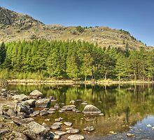 Blea Tarn-Wood & Water by Jamie  Green